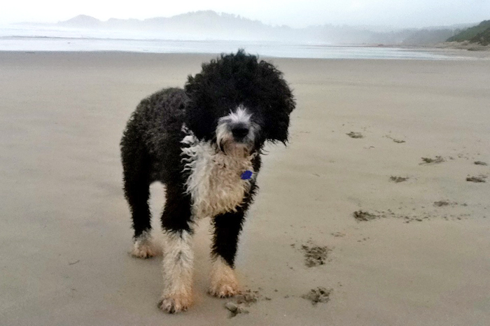 Top ten doggone good spots oregon coast visitors association a sandy dog is a happy dog owners will be happy to find this self service dog wash and pet store in downtown astoria shampoo brushes towels and dryers solutioingenieria Images